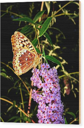 Butterfly Banquet 2 Wood Print by Will Borden
