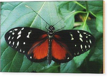 Butterfly Beauty Wood Print by Beril Sirmacek
