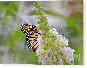 Wood Print featuring the photograph Butterfly Behind Bush by Jay Nodianos