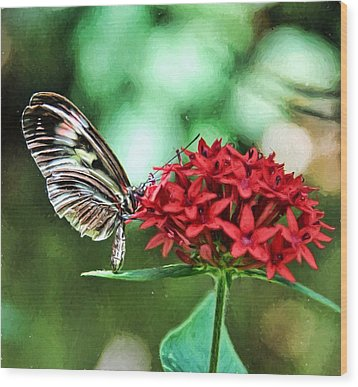 Wood Print featuring the photograph Butterfly by Bill Howard