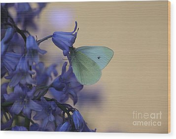 Butterfly Bounty Wood Print