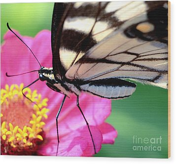Butterfly Brunch Wood Print by Chad and Stacey Hall