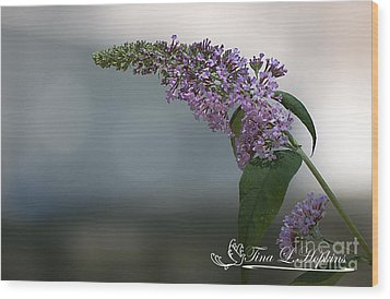 Butterfly Bush 20120706_165a Wood Print