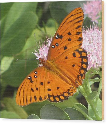 Butterfly Butterfly 2  Wood Print by Cathy Lindsey