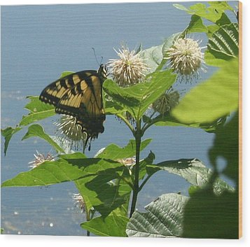Butterfly By The Water Wood Print by Stephen Melcher