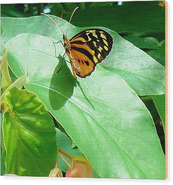 Wood Print featuring the photograph Butterfly Chasing Shadow by Janette Boyd