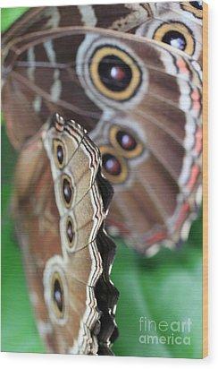 Butterfly Close Up  Wood Print by AR Annahita