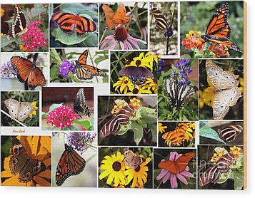 Wood Print featuring the photograph Butterfly Collage by Steven Spak