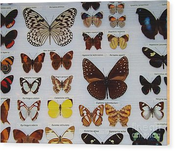 Butterfly Collection Wood Print by Brigitte Emme