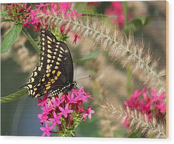 Butterfly Days Wood Print by Suzanne Gaff