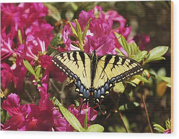 Wood Print featuring the photograph Butterfly by Debra Crank