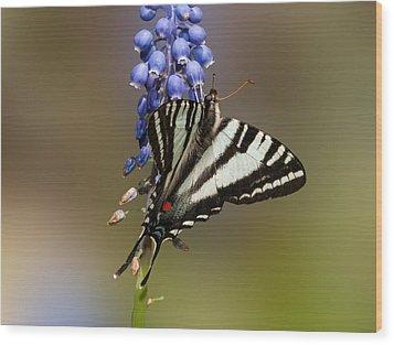 Butterfly Delight Wood Print by Lara Ellis