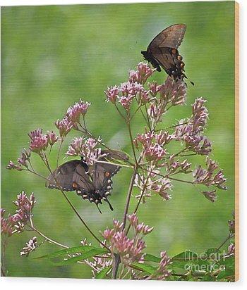Butterfly Duet  Wood Print