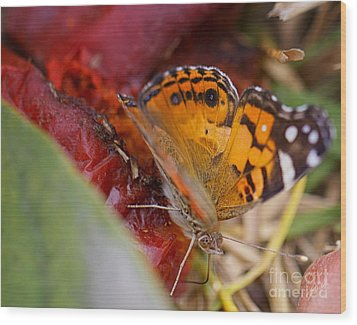 Wood Print featuring the photograph Butterfly by Erika Weber