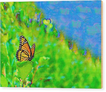 Wood Print featuring the photograph Butterfly Fantasy by Marianne Campolongo