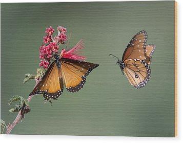 Butterfly Flight Wood Print by Jeff Wendorff