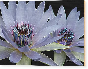 Butterfly Garden 26 - Water Lilies Wood Print by E B Schmidt
