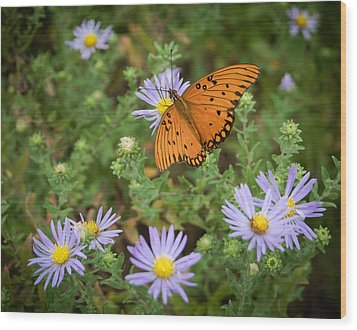 Butterfly Garden Wood Print by James Barber
