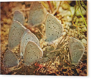 Wood Print featuring the photograph Butterfly Gathering by Peggy Collins