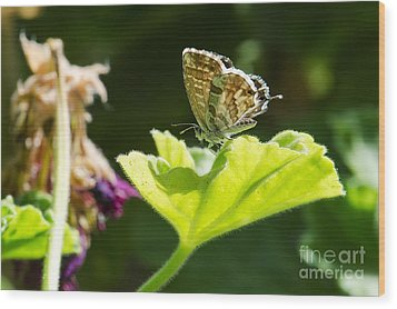 Butterfly Wood Print by Giovanni Chianese