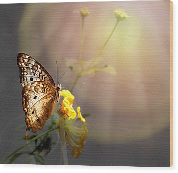 Butterfly Glow Wood Print by Judy Vincent