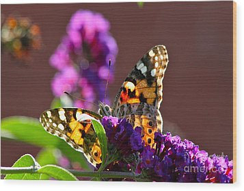 Wood Print featuring the photograph Butterfly Hiding by Jay Nodianos