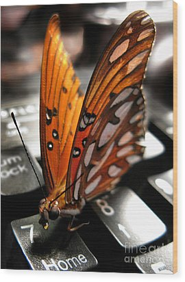 Wood Print featuring the photograph Butterfly Home At 7 by Jennie Breeze