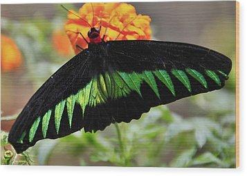 Butterfly Wood Print by Jose Carlos Fernandes De Andrade