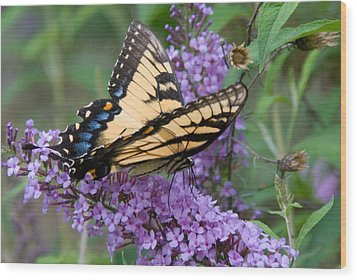 Wood Print featuring the photograph Butterfly Landing by Greg Graham