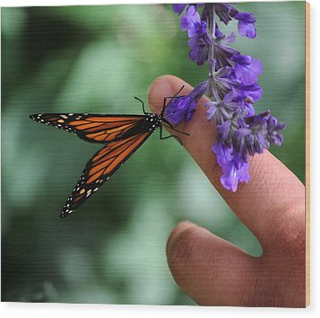 Wood Print featuring the photograph Butterfly by Leticia Latocki