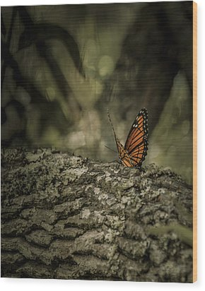 Butterfly Wood Print by Mario Celzner