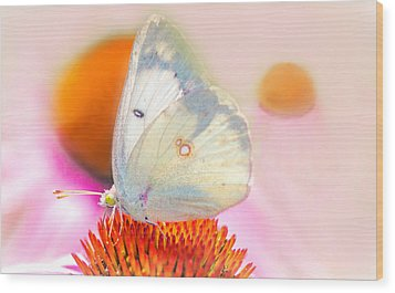 Wood Print featuring the photograph Butterfly by Marion Johnson