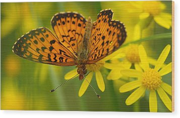 Wood Print featuring the photograph Butterfly by James Peterson