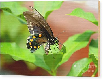 Wood Print featuring the photograph Butterfly Nesting by Jay Nodianos