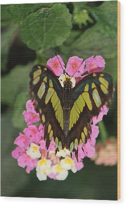 Butterfly Of Love Wood Print