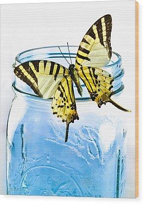 Butterfly On A Blue Jar Wood Print by Bob Orsillo