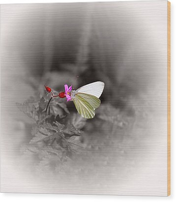 Wood Print featuring the photograph Butterfly On A Pink Flower by Tracie Kaska