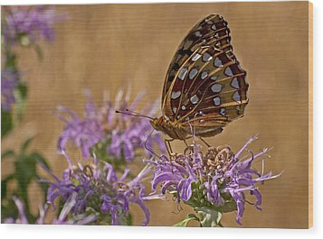 Butterfly On Bee Balm Wood Print