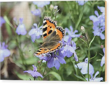 Butterfly On Blue Flower Wood Print by Gordon Auld