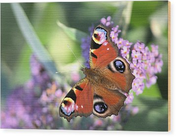 Butterfly On Buddleia Wood Print by Gordon Auld