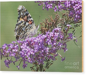 Wood Print featuring the photograph Painted Lady Butterfly by Eunice Miller