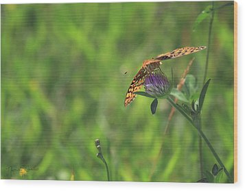 Butterfly On Clover Wood Print