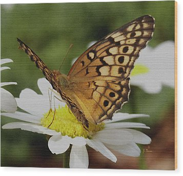 Wood Print featuring the photograph Butterfly On Daisy by James C Thomas