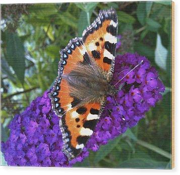 Butterfly On Flower Wood Print by Beril Sirmacek