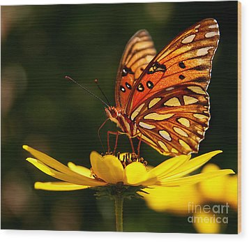 Butterfly On Flower Wood Print by Joan McCool