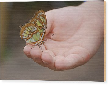 Wood Print featuring the photograph Butterfly On Hand by Leticia Latocki