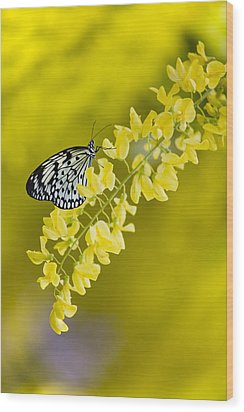 Butterfly On Laburnum Wood Print