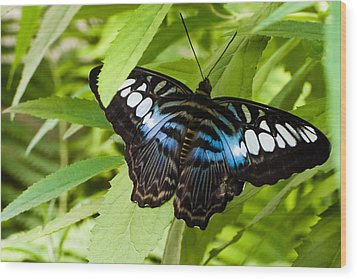 Butterfly On Leaf   Wood Print by Lars Lentz