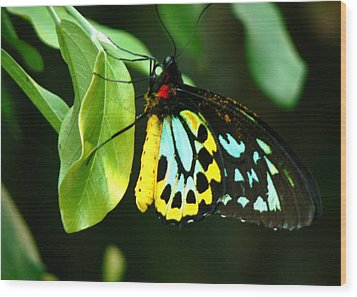 Butterfly On Leaf Wood Print by Laurel Powell
