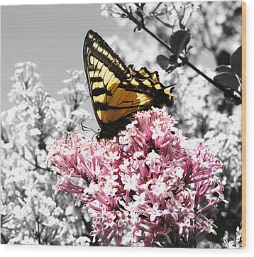 Butterfly On Lilac Wood Print by Mellisa Ward